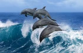 Amáveis golfinhos nos recebem rumo a Montão de Trigo