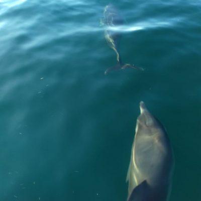 Golfinhos dão Show de beleza